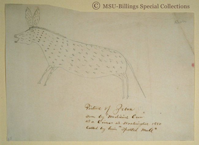 Great Plains Ledger Drawings : Ledger drawing of circus zebra indian peoples digital